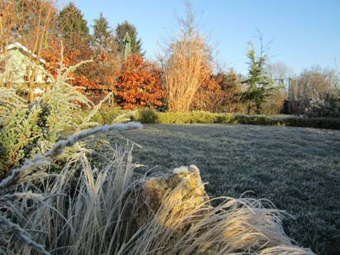 planting around a lawn in winter